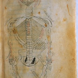 The Anatomy of the Human Body (1488), The skeleton