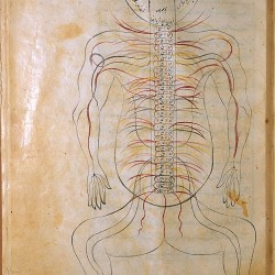 The Anatomy of the Human Body (1488), The nervous system