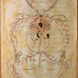 The Anatomy of the Human Body (1488), The arterial figure