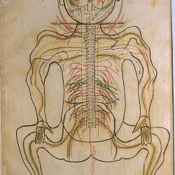 The Anatomy of the Human Body, The nervous system