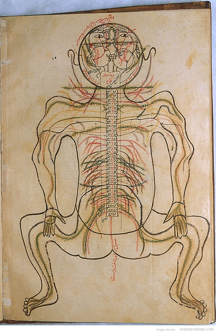 Mansur Treatise On Human Anatomy Shahrefarang