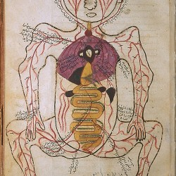 The Anatomy of the Human Body, The arterial figure