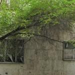 Walking in Tehran's Amirabad - پرسه در امیرآباد (53)