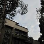 Walking in Tehran's Amirabad - پرسه در امیرآباد (110)