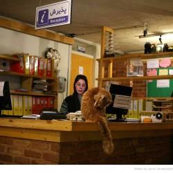 Animal Hospital in Tehran