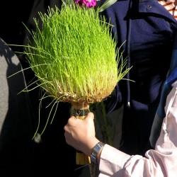 Nowruz in Tajrish, Tehran, 2014 (44)