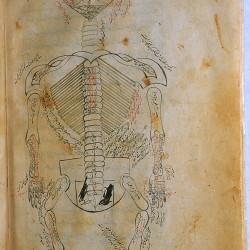 The Anatomy of the Human Body (1488), The skeleton - تشريح بدن انسان (۱۴۸۸ میلادی)، اسکلت