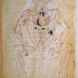 The Anatomy of the Human Body (1488), The venous system - تشريح بدن انسان (۱۴۸۸ میلادی)، سیستم سیاهرگی
