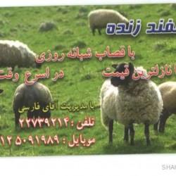 Iranian Business Card (15)